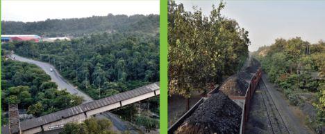 CIL plants 97.65 million trees since inception
